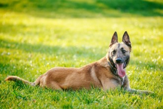 Two dogs have learned to detect cancer