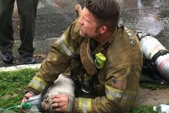 This firefighter resuscitated a…