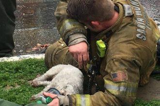 Ce pompier a réussi à réanimer un petit chien asphyxié