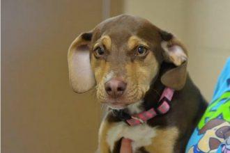 Cette chienne a sauvé la vie d'une…