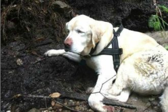 A blind dog was lost in the wild for over a week