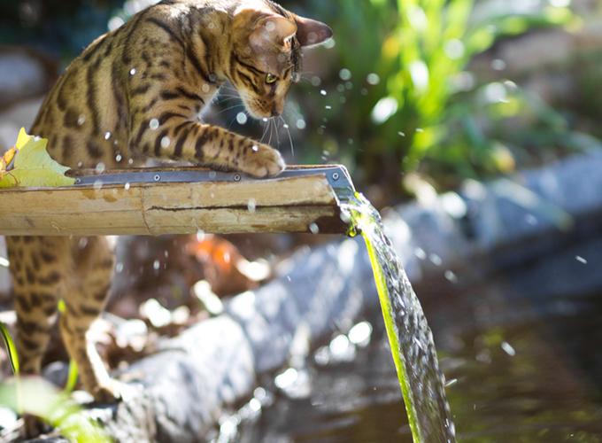 Resultado de imagen de gato bengala