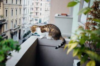 Propriétaires de chats, faites attention au balcon