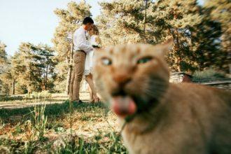 10 hilarious photobombing cats