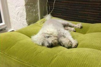 Ce chien a été retrouvé après avoir…