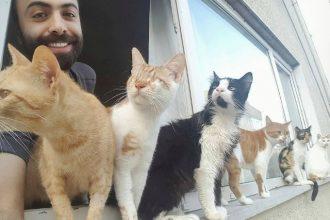 Ce pianiste a un public composé exclusivement de chats