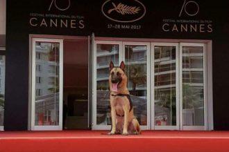 Ce chien adopté à la SPA a pu monter les marches à Cannes