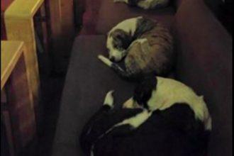 En Grèce, les employés d'un café logent des chiens errants