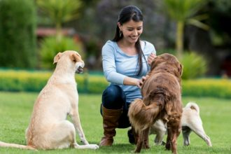 Quelles différences entre choisir un chien avec ou sans…
