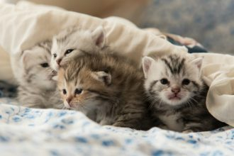 Which kitten to choose from a litter