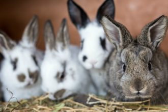 Le nettoyage de la cage du lapin