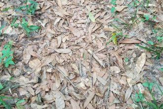 Trouverez-vous le serpent caché sur cette photo ?