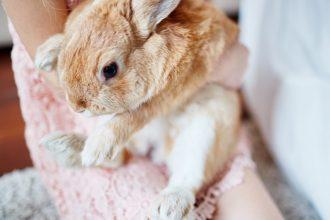 Le stress du lapin : causes et symptômes