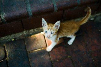 Un chat torturé à mort par des jeunes à…