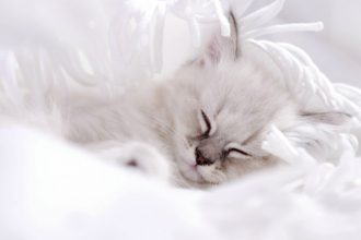 Kittens' sleeping habits: everything you need to know