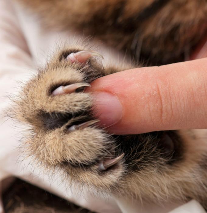 Préférence 5 choses à savoir sur les pattes du chat - Yummypets GO11