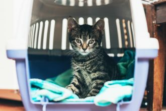 What you need to know before choosing a cat carrier