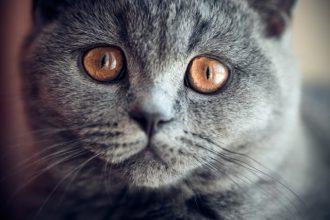 Tout savoir sur l'épilepsie chez le chat