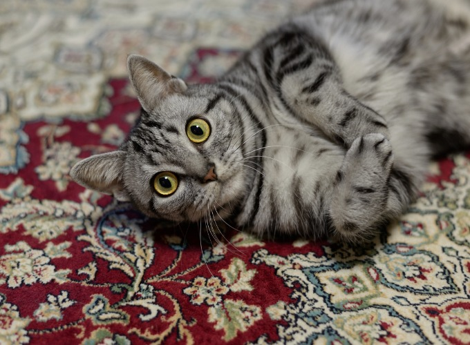 Cat peeing on the floor