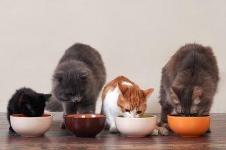 Understanding how cats eat
