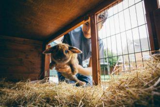 3 conseils pour avoir un lapin heureux
