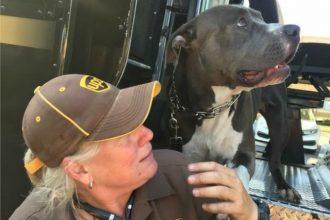 Un livreur adopte un chien dont la…
