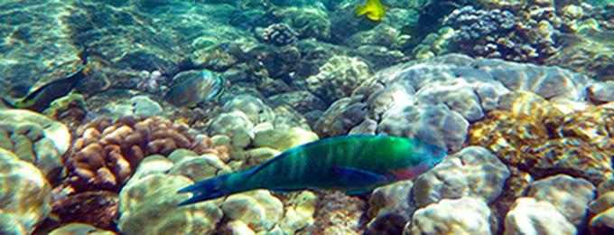 Peces tropicales para un acuario yummypets for Comida para peces tropicales acuario