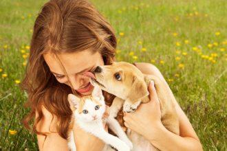 Les zoonoses : des maladies transmissibles entre l'animal…