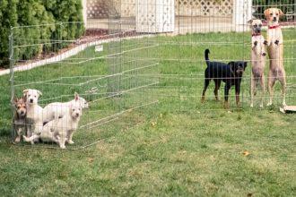 Mujer adopta a un perro mayor que nadie quería