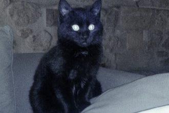 De nombreux chats stérilisés grâce au…