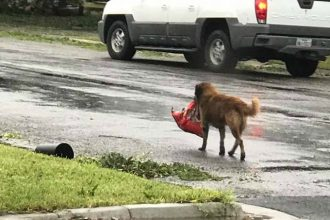 Dog faces Hurricane Harvey with entire…