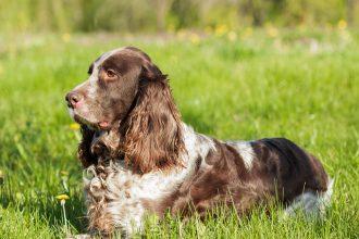 Un allemand perd son chien en France et…