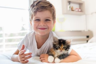 Understanding kitten socialisation