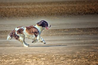German man loses dog in France and takes a year's leave…