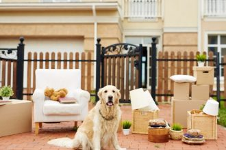 How to handle moving house with your dog