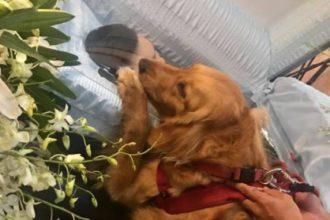 Un chien veille son maître lors de ses funérailles