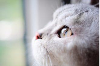 Todo sobre los ojos del gato