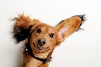5 cosas extrañas que los perros hacen y sus explicaciones