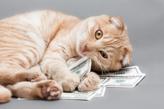 How much does a cat really cost?