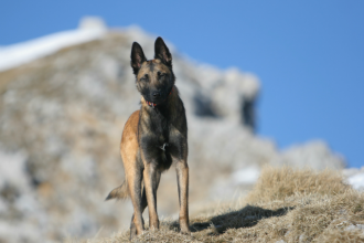 Un chasseur tue un chien de vacanciers en pensant que…