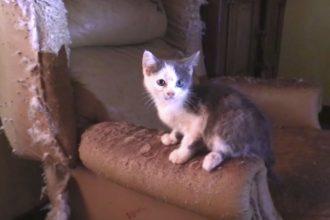 42 chats sauvés d'une maison inhabitée