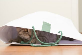 Weird things your cat does and why