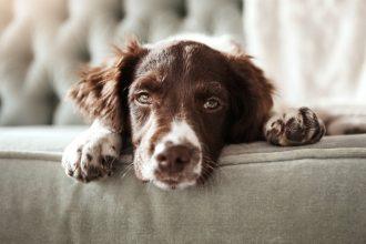 Comment savoir si mon chien est allergique ?