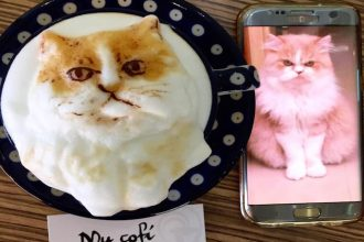 This café can turn your pet into coffee art