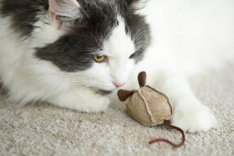 4 DIY à faire pour votre chat