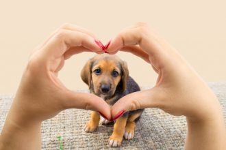 The 4 signs of heart disease in dogs…
