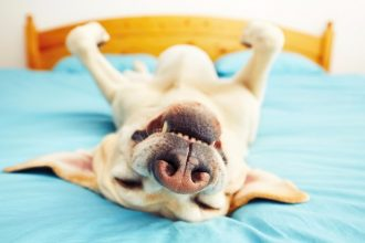 5 weird things your dog does and why