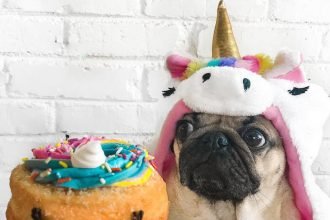 3 Dog Instagram accounts you NEED to follow