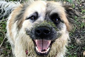 This dog is on a mission to save earthworms, one at a time