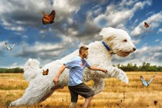 Photographer creates beautiful dreamworld with his giant dog